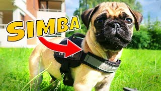 Mein Mops Simba! | Mexify - (Hunde Vlog #1)