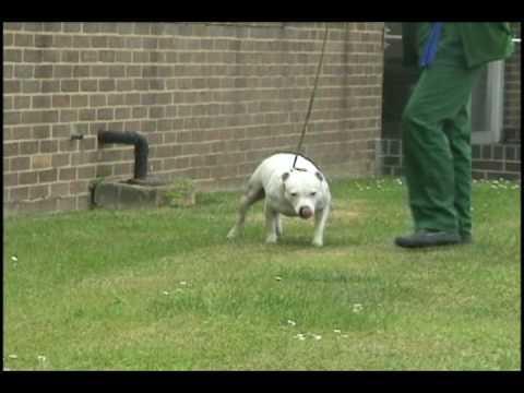 Treatment for paralysed dog.avi