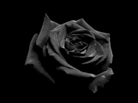 Marilyn Manson Quotes Wallpaper Black Rose Immortal Part I Opeth Youtube