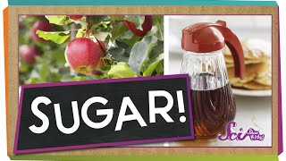 Where Does Sugar Come From?