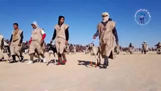 المهرجان الدولي للصحراء بدوز الدورة 52 : اليوم الرابع بساحة حنيش