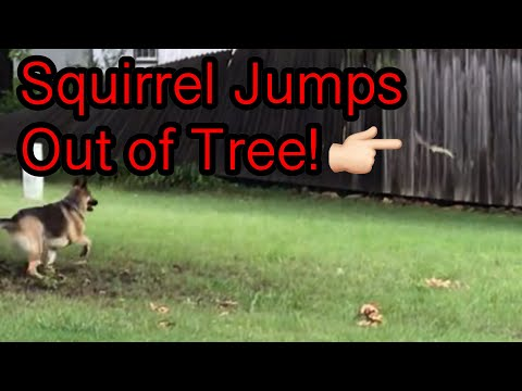 Squirrel Lands in front of Odin