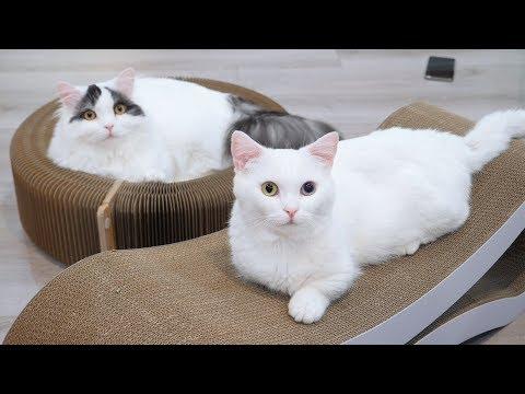 고양이가 가장 좋아하는 스크래쳐! 긁는다 박박!