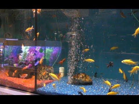 AQUAZOO, Croydon | Beautiful Tropical Fish | Aquarium Supplies