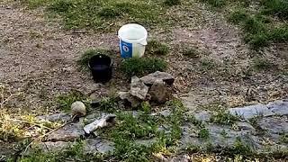 Рыбалка супер Сом с берега весной Ловим Сома на реке Майн