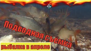 Подводная съёмка РЫБАЛКА НА ФИДЕР Реакция рыбы на прикормку Ловля на фидер