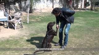 Best Dogs Fun Commands