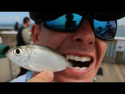 The SECRET to Catching Fish on a Pier! (Juno Pier Snook Fishing)