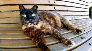公園のベンチに野良猫がいたので隣に座ると膝の上に乗ってきて