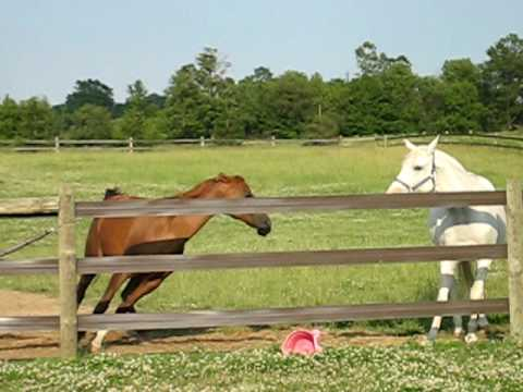 Horse Behavior: Group Dominance