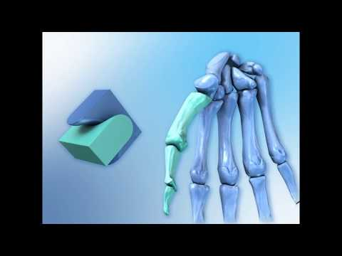 3D анимация физиологической анатомии костей и скелетных мышц человека