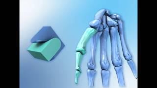 Скачать 3D анимация физиологической анатомии костей и скелетных мышц человека