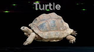 Turtle Spirit Animal.   Meaning of Spirit Animal Symbols.