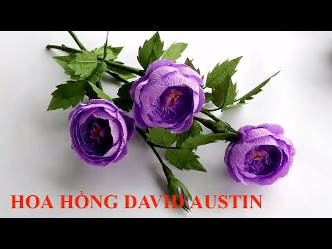 Hướng dẫn cách tự làm Hoa Hồng David Austin bằng giấy nhún ❀ DiyBigBoom-VN   Foci