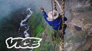 Madu Nepal Ini Bikin Orang Berhalusinasi