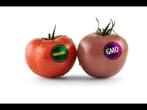 GMO, is it good for you or not?