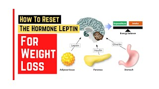 How to reset leptin hormone for weight loss