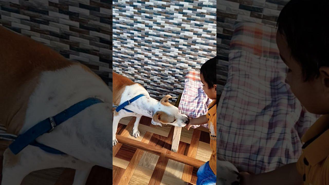 A small child is feeding a dog #shorts