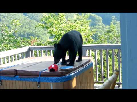 Gatlinburg Mountain View Vacation Cabin Rental - VRBO #32364 from YouTube · Duration:  3 minutes