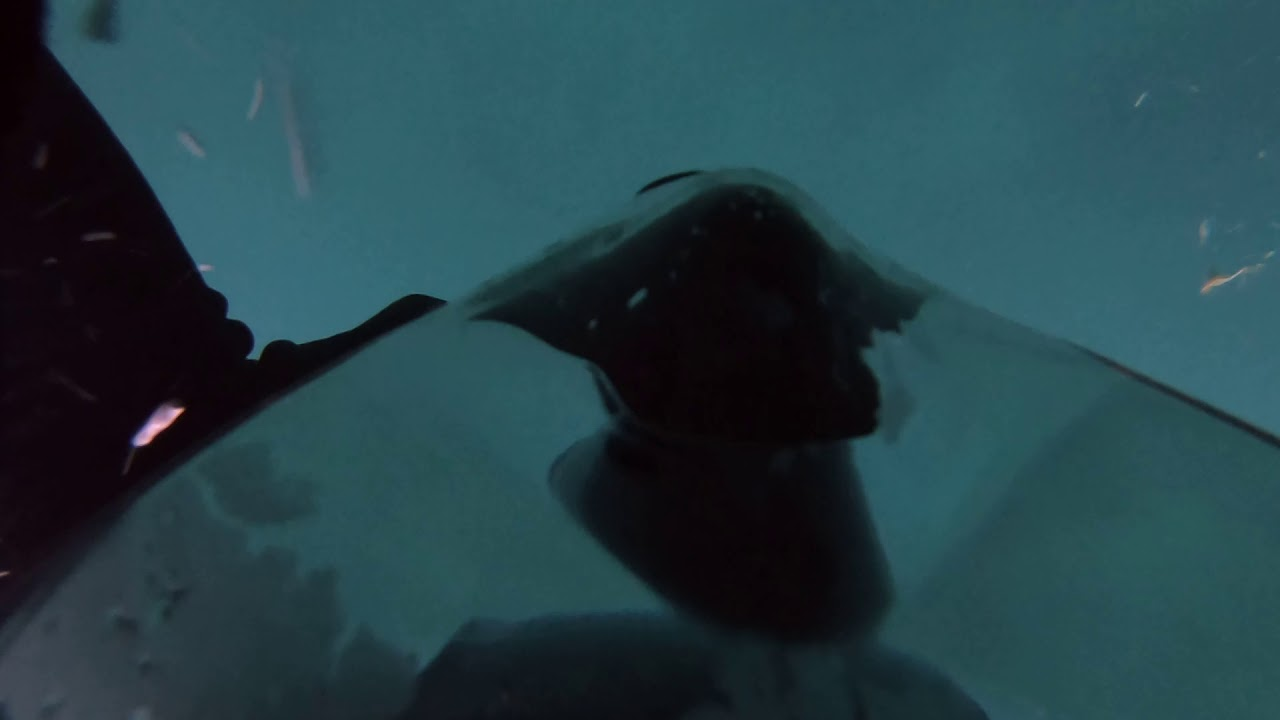 Salton sea fishing report 2011 ford
