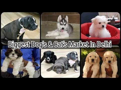BIGGEST OR CHEAPEST DOGS & CATS MARKET/SHOP IN DELHI,NCR
