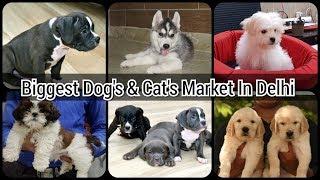 BIGGEST OR CHEAPEST DOGS & CATS MARKET/SHOP//BEST PET SHOP