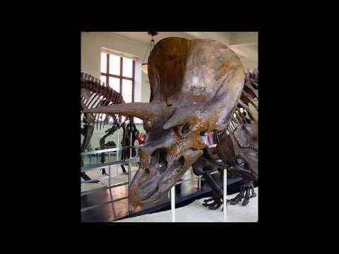 Treasures of New York:American Museum of Natural History in New York