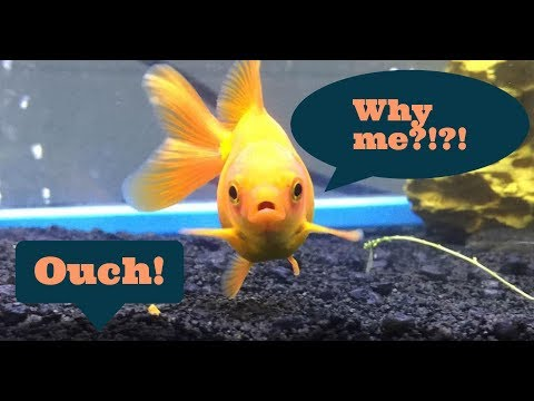 Science Experiment On Fish?! (My Recent Experience)