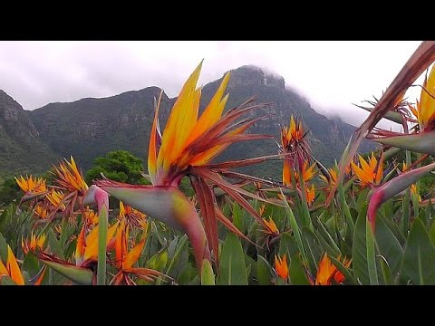Kirstenbosch - National Botanical Garden