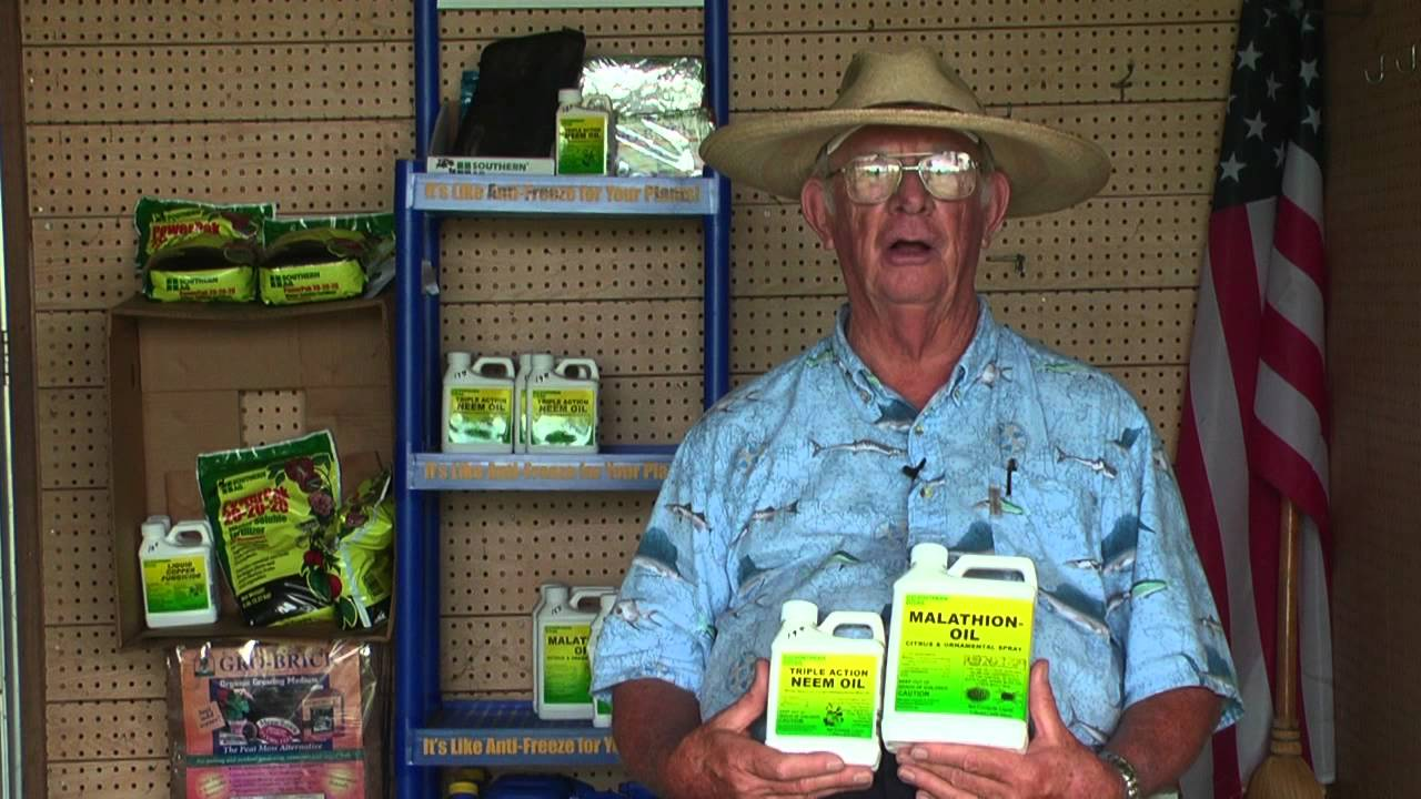 How to Get Rid of Spider Mites - YouTube