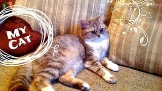 Моя кошка - самые эффективные средства против блох. Дерматит у котов
