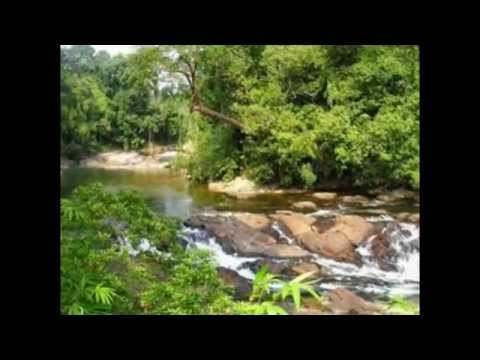 Endau Rompin National Park - Tourist Attractions in Malaysia