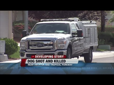 Dog shot and killed by citizen in northwest Las Vegas