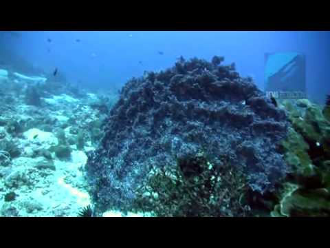 Diving Shark Point, Gili Islands, Lombok, Indonesia [From RemsProduction ]