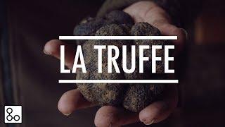 La truffe noire du Périgord - Documentaire YouCook