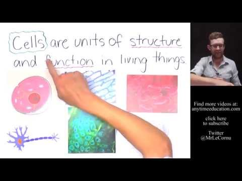 What Are Cells? (The Cell Theory)