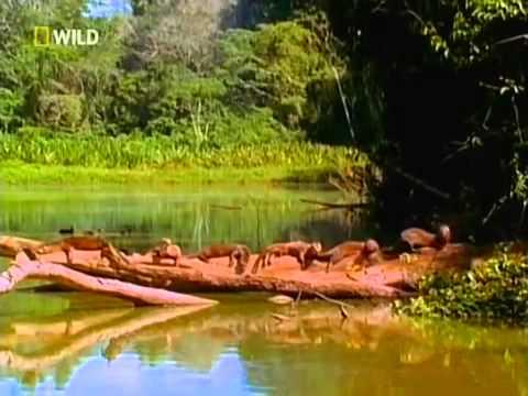 #JPG2 Первозданная природа  Ману  Таинственный Перуанский Лес - Познавательные и прикольные видеоролики