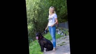 Как фотографировать собак?  Домашние животные! Cane corso!