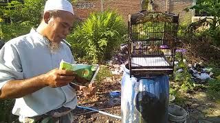 Download Video Perawatan Burung Trucuk Biar Gacor MP3 3GP MP4