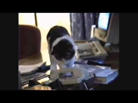 смотреть самые смешные приколы с котами
