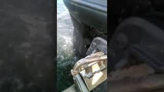 explosiones fueraborda yamaha 40cv 2t autolube. cual es la causa?