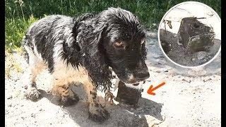 Женщина нашла мокрую собаку возле реки и расплакалась, увидев, что у неё на шее