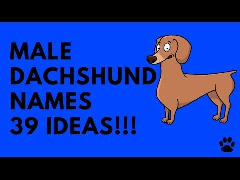 male-dachshund-names---39-very-best-ideas!!!-|-names
