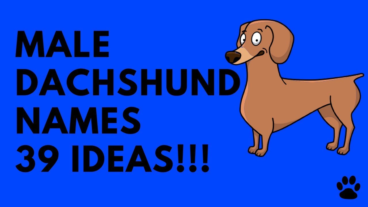 Male Dachshund Names 39 Very Best Ideas Names Youtube