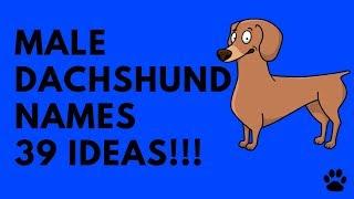 Male Dachshund Names - 39 Very Best Ideas!!! | Names