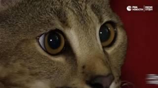 Кошка на миллион