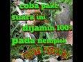 Suara Pikat Semua Jenis Burung Ampuh Ngobra(.mp3 .mp4) Mp3 - Mp4 Download