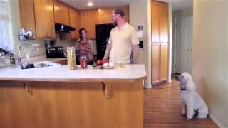 Break A Noodle, Adopt A Poodle - Ronco Noodles Commercial