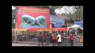 Cho trau Phu Son   Bac Ninh