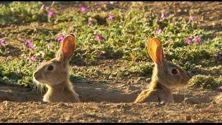 #1541. Кролики и зайцы (В мире животных)